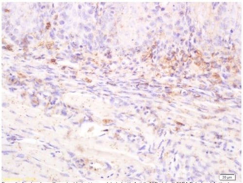 Immunohistochemistry (Formalin/PFA-fixed paraffin-embedded sections) - Anti-IL-20R1 antibody (ab203196)