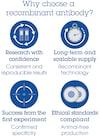 Alexa Fluor® 555 Anti-SQSTM1 / p62 antibody [EPR4844] - Autophagosome Marker (ab203430)
