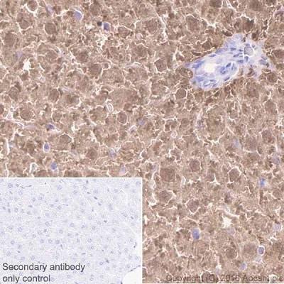 Immunohistochemistry (Formalin/PFA-fixed paraffin-embedded sections) - Anti-Liver Arginase antibody [EPR19652] (ab203490)