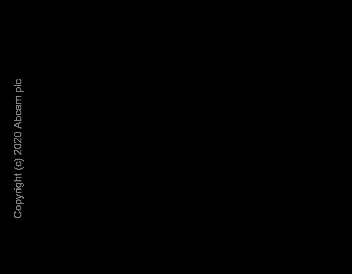 ELISA - Anti-PDGFR alpha antibody [EPR22059-270] (ab203491)