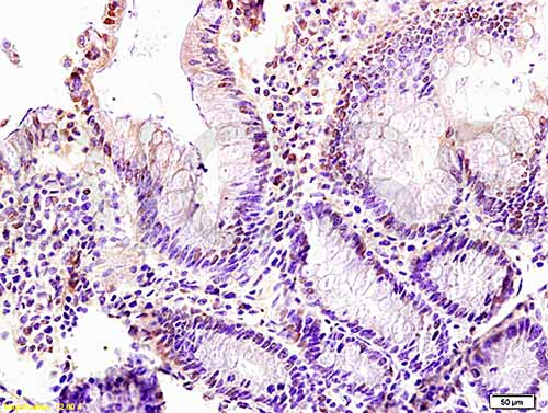 Immunohistochemistry (Formalin/PFA-fixed paraffin-embedded sections) - Anti-LZTFL1 antibody (ab203750)