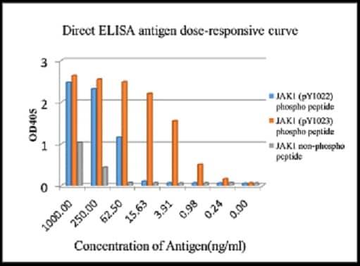 ELISA - Anti-JAK1 (phospho Y1022 + Y1023) antibody [EPR1899(2)] - BSA and Azide free (ab203784)