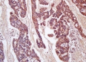 Immunohistochemistry (Formalin/PFA-fixed paraffin-embedded sections) - Anti-CD200 / OX2 antibody (ab203887)