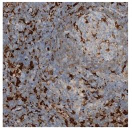 Immunohistochemistry (Formalin/PFA-fixed paraffin-embedded sections) - Anti-NAGK antibody (ab203900)