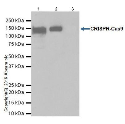Immunoprecipitation - Anti-CRISPR-Cas9 antibody [EPR19799] (ab203933)