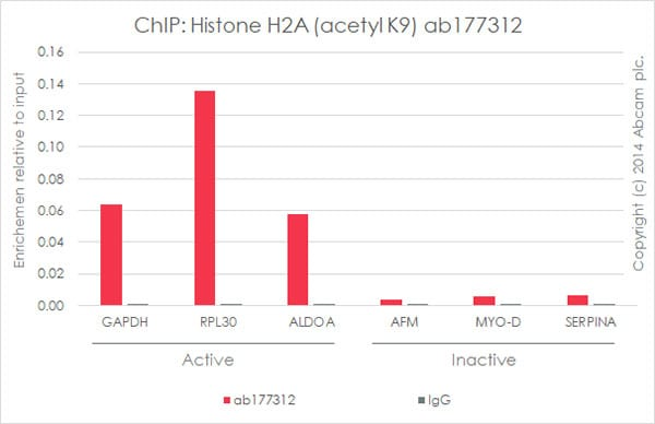 ChIP - Anti-Histone H2A (acetyl K9) antibody [EPR17471] - BSA and Azide free (ab203949)