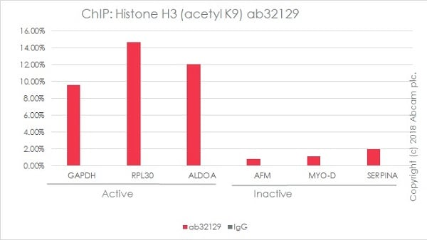 ChIP - Anti-Histone H3 (acetyl K9) antibody [Y28] - ChIP Grade – BSA and Azide free (ab203951)