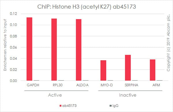 ChIP - Anti-Histone H3 (acetyl K27) antibody [EP865Y] - BSA and Azide free (ab203953)