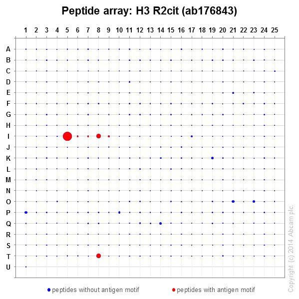 Peptide Array - Anti-Histone H3 (citrulline R2) antibody [EPR17703] - BSA and Azide free (ab203954)