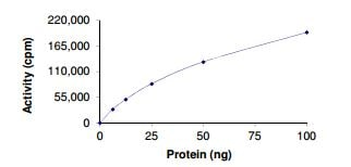 Functional Studies - Recombinant human HIPK4 protein (ab204158)