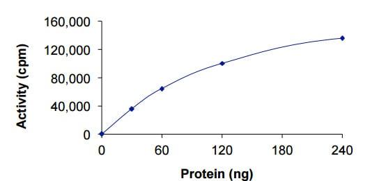 Functional Studies - Recombinant human ANKK1 protein (ab204164)
