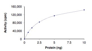 Functional Studies - Recombinant human BRAF (mutated V600D) protein (ab204217)
