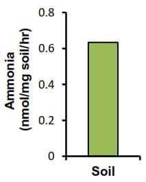 Urease Activity Assay Kit (Colorimetric) (ab204697)