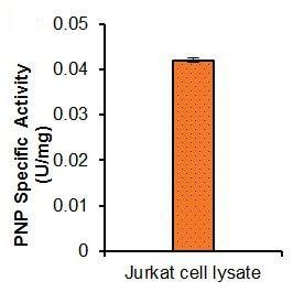 Purine Nucleoside Phosphorylase Activity Assay Kit (Fluorometric) (ab204706)