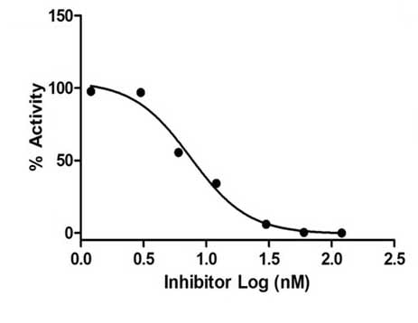 Plasmin Inhibitor Screening Assay Kit (Fluorometric) (ab204729)