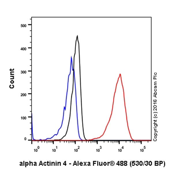 Flow Cytometry - Anti-alpha Actinin 4 antibody [EPR2533(2)] - BSA and Azide free (ab204919)