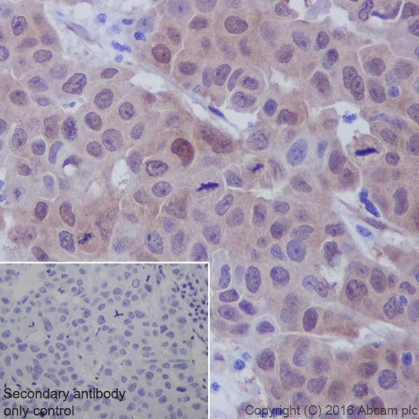 Immunohistochemistry (Formalin/PFA-fixed paraffin-embedded sections) - Anti-active YAP1 antibody [EPR19812] (ab205270)