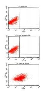 Flow Cytometry - Anti-Podoplanin / gp36 antibody [18H5] (FITC) (ab205333)