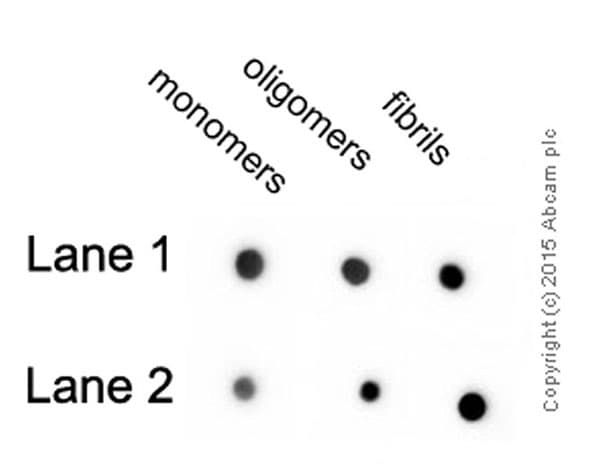 Dot Blot - Anti-beta Amyloid antibody [mOC23] - Conformation-Specific (ab205340)