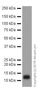 Western blot - Anti-FXYD3 antibody [EPR17160] (ab205534)