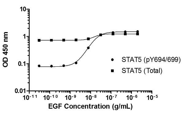 Induction of STAT5 A/B (pY694/699) phosphorylation in A431 cells in response to EGF treatment.