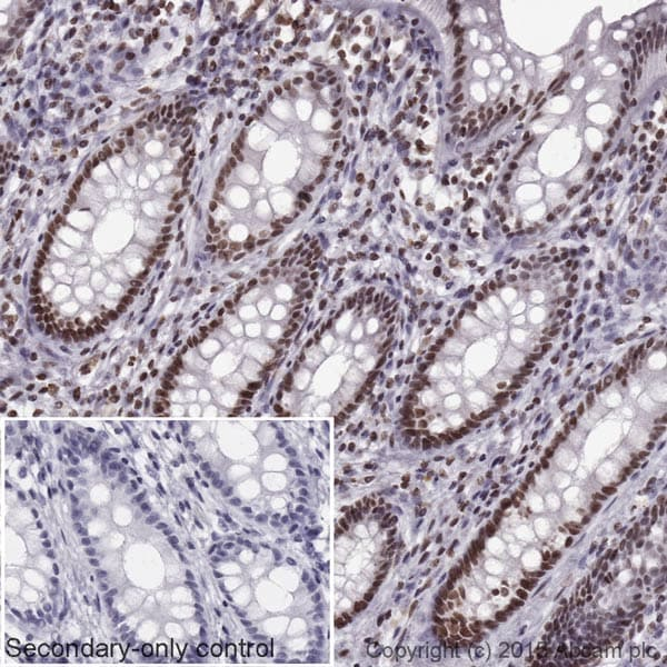 Immunohistochemistry (Formalin/PFA-fixed paraffin-embedded sections) - Goat Anti-Mouse IgG H&L (HRP) (ab205719)
