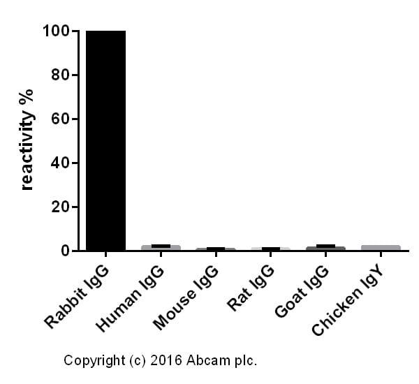 ELISA - Donkey Anti-Rabbit IgG H&L (HRP) (ab205722)