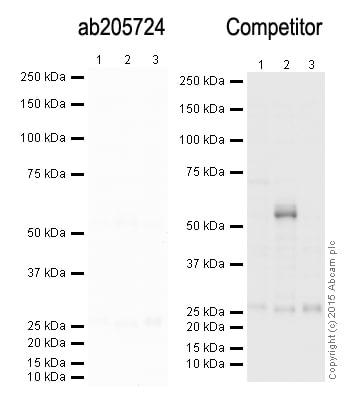Western blot - Donkey Anti-Mouse IgG H&L (HRP) (ab205724)
