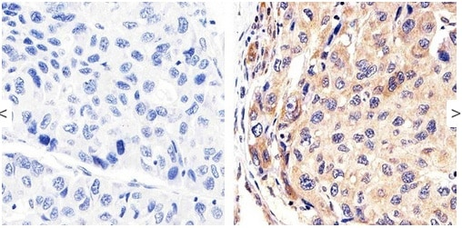 Immunohistochemistry (Formalin/PFA-fixed paraffin-embedded sections) - Anti-Syndecan 2/HSPG antibody (ab205884)