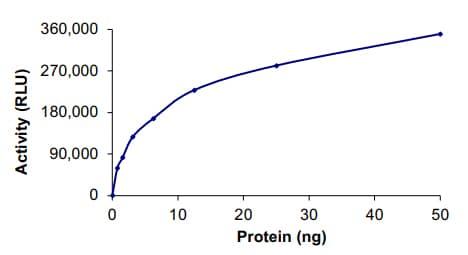 Functional Studies - Recombinant human SRGAP3 + BRAF protein (ab205991)