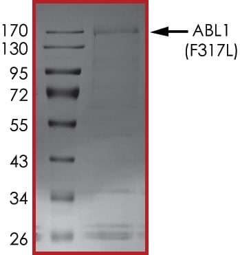 SDS-PAGE - Recombinant human ABL1 (mutated F317 L) protein (Active) (ab206003)