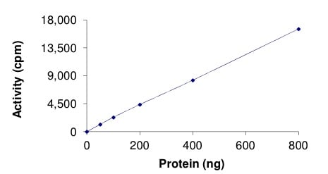 Functional Studies - Recombinant mouse WNK4 protein (ab206027)