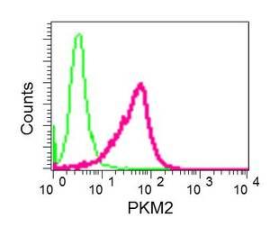 Flow Cytometry - Anti-PKM antibody [EPR10138(B)] - BSA and Azide free (ab206129)