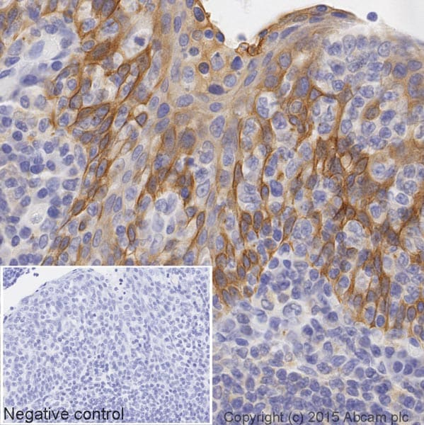 Immunohistochemistry (Formalin/PFA-fixed paraffin-embedded sections) - Anti-M-CSF antibody [EP1179Y] (HRP) (ab206234)