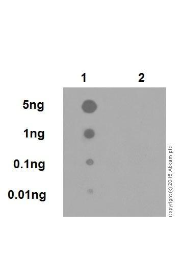 Dot Blot - Anti-Amyloid Precursor Protein (phospho T743) antibody [EPR7074(N)] (ab206297)