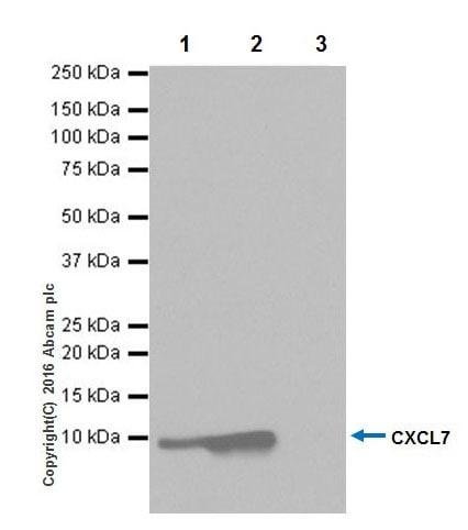 Immunoprecipitation - Anti-CXCL7/PBP antibody [EPR20036] (ab206406)
