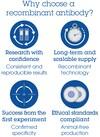 Alexa Fluor® 555 Anti-Topoisomerase II alpha + Topoisomerase II beta/TOP2B antibody [EPR5377] (ab206605)