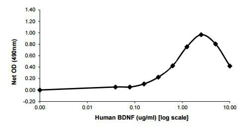 Functional Studies - Recombinant human BDNF protein (ab206642)