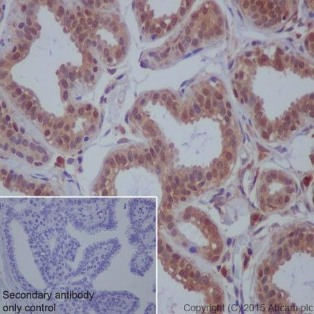 Immunohistochemistry (Formalin/PFA-fixed paraffin-embedded sections) - Anti-beta Arrestin 1 antibody [E274] - BSA and Azide free (ab206776)