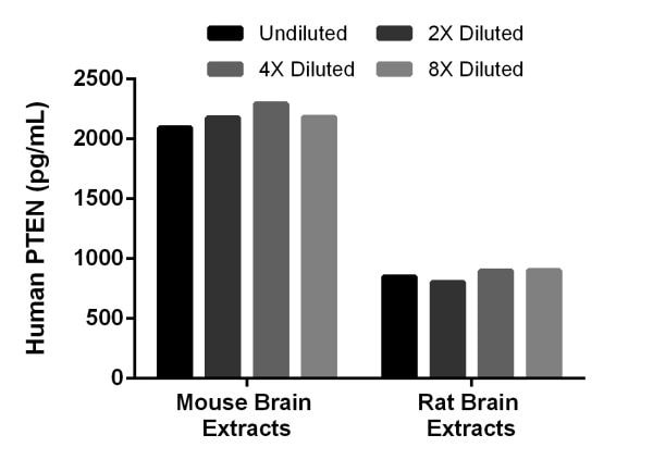 Rat and mouse brain extracts were diluted 2-fold in 1X Cell Extraction Buffer PTR and assayed for cross reactivity.
