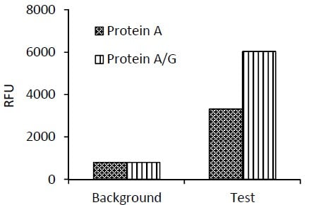 Comparison of Binding Capacity of Protein-A and Protein-A/G Beads.