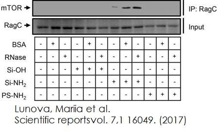 Functional Studies - Immunoprecipitation kit (ab206996)