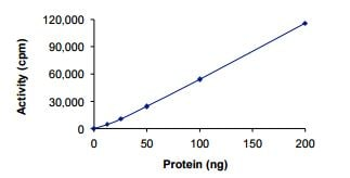 Functional Studies - Recombinant human PKN1 protein (ab207102)
