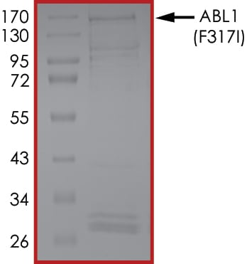 SDS-PAGE - Recombinant human ABL1 (mutated F317 I) protein (ab207124)