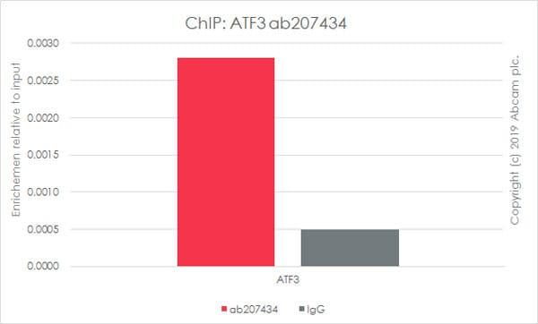 ChIP - Anti-ATF3 antibody [EPR19488] - ChIP Grade (ab207434)