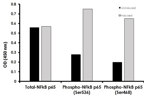 Measurement of phosphorylated and total NF-kappaB p65.