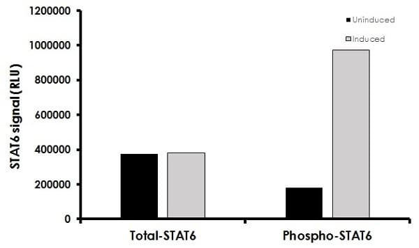 Measurement of phosphorylated and total STAT6.