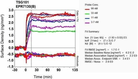 OI-RD Scanning - Anti-TSG101 antibody [EPR7130(B)] - BSA and Azide free (ab207567)