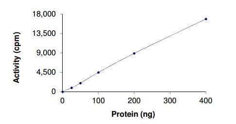 Functional Studies - Recombinant rat Tec protein (ab207949)