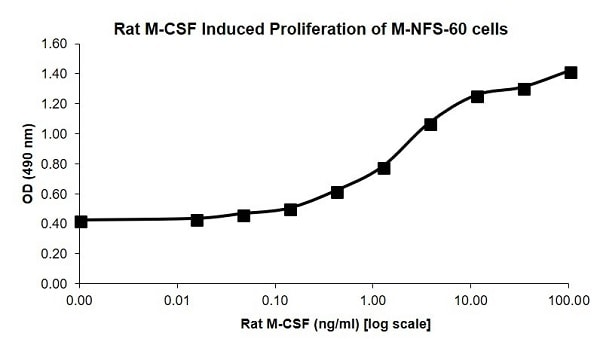 Cellular activity - Recombinant rat M-CSF protein (Animal Free) (ab207964)